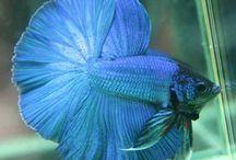 Vissen en andere waterdieren