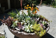 Great Summer Containers