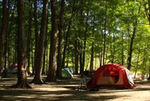 Camping / by Ali Lewis