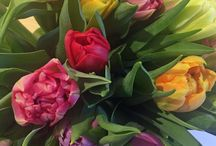 Superb Flowers / Have fun with this wonderful selection of great flowers!