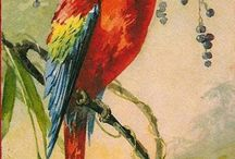 Applikationen  Papageien Vögel