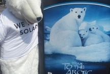 Wattco ijsberen, we need solar / De Wattco ijsberen kom je overal tegen