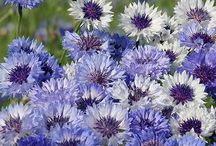 2015 plants & seeds to buy / by Gretchen Knapp