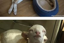 Animals / Cute, lovely, funny pins about animals.