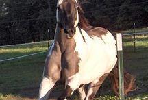 Cavalli - spiriti selvaggi