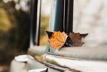 Lovin Autumn