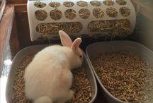 Bunny housing