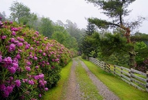 Gardens & Landscapes