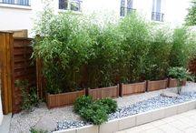 jardin et plante verte