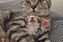 Kedi ile yavrusu