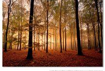 Photo inspiration - Autumn