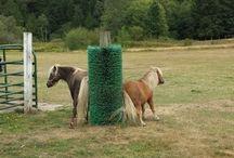 horse paddock ideas
