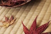 japanese Maple  - leaves
