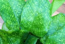 Indoor plant varieties