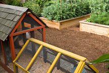 Projekt zdrowego ogrodu