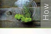 Miniature & Fairy Gardens, Terrariums