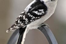 Birds / by Megan Doyle
