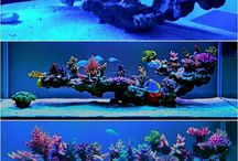 reef scapes