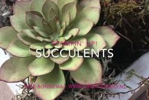 Oh So Succulents