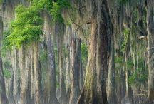 Træer og svampe