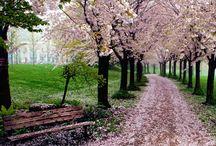 printemps    prató       jaro