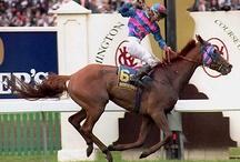 Racehorses.