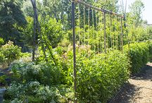 Garden Structure Ideas / Here at Round Pond Estate, we find some plants and crops produce better when grown vertically off the ground.