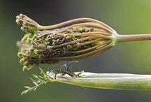 Botanical## greenlife...