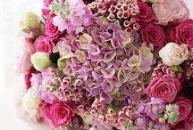 Rosas de volores