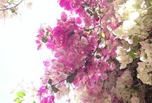 photography of easter,spring ,art / Photography of spring ,easter, faberge eggs,art delightful