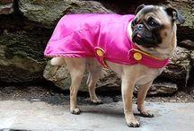 Diy dog raincoat