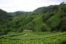 Veneto, my part of Italy