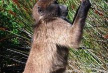 Overberg Animal Life
