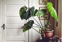 Trendy indoor jungles