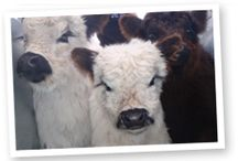 Honeycomb Valley Farm - Animals / Some of our much-loved farm animals