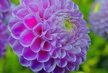 gardening / by Jenn Zoll