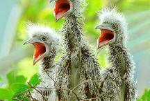birdiesss