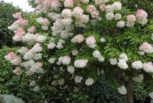 Vackra växter