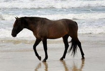 All Things Equine / Interesting, fun, inspiring or wishful thinking. ;-) / by Stacey Bates