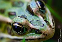 Inspirational wildlife / Wildlife photography I like from other photographers