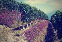 """Il territorio / La valorizzazione dei prodotti agro-alimentari e artigianali del territorio del Gal Media Valle d'Aosta.  Foto: """"Archivio Assessorato regionale dell'Agricoltura e Risorse naturali"""""""