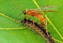 Insects I love