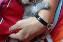 Kitties r Cute 2 / by Mary Poe