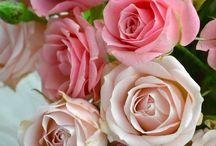 Roses & Peonies / by Marieke Mulder-Torres