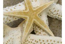 Prachtige stranden / Een echt vakantiegevoel krijg ik als ik bij zee ben geweest. Even genieten van het zand aan je voeten, geruis... Heerlijk!