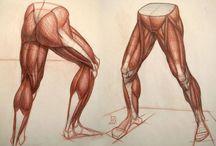 szermierze anatomia