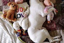 lindos cachorros e bebes
