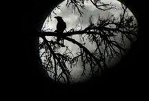 Ptaki znane i nieznane