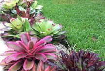 Bromeliads Collection