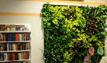 Vertical growing plants